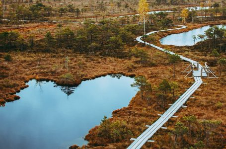 EXPERIENCING THE GREAT KEMERI BOG BOARDWALK